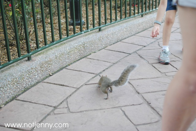 disney squirrel